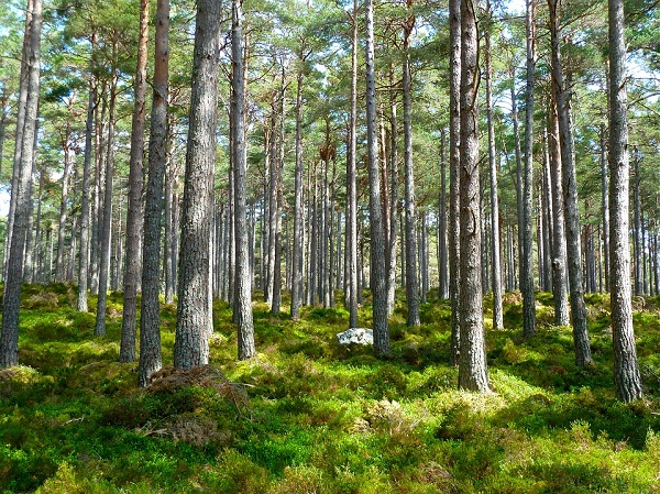 A törvénymódosítás szerint már az erdőtelepítést is lehet támogatni a Vidékfejlesztési Program keretében