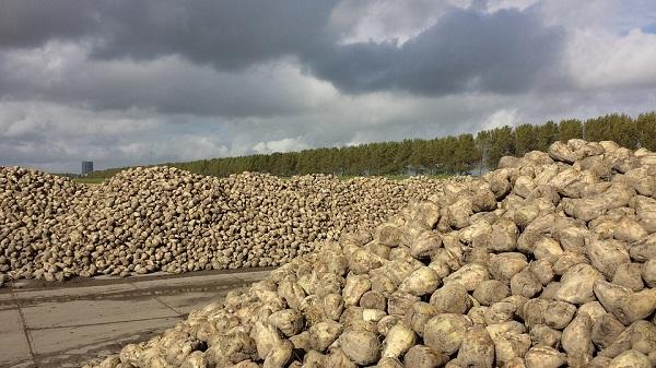 Lengyelország tovább növelheti cukorpiaci előnyét a korlátozások feloldásával