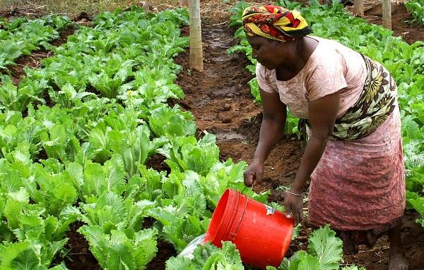 A mezőgazdasági képzés lehet az egyetlen kiút a nehéz körülmények közül