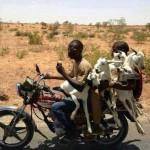 Kecskeszállítás Kenyában
