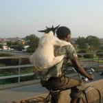 Ismét egy kenyai életkép