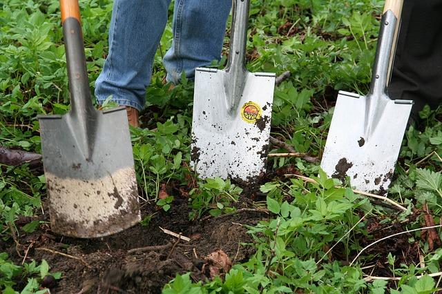 Sok kertész problémaként tekint a tarackbúzára (Fotó: Pixabay)