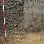Mezőségi talaj