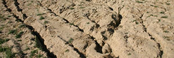 Talajszennyezés – Wikipédia