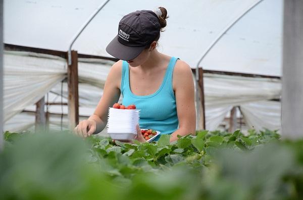 A 10 milliárd forintos támogatásból számos új, mezőgazdasági munkahely is létrejöhet