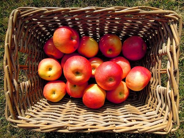 Az ipari alma árának normalizálódására számítanak idén az almatermesztők