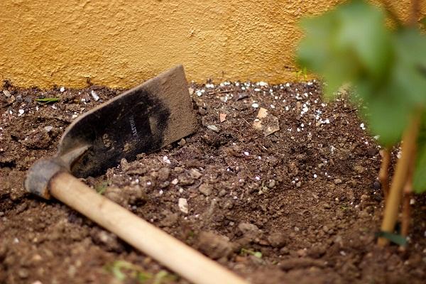 Másodvetés esetén is a talaj-előkészítéssel kell kezdeni a munkát