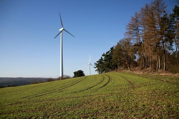 Számtalan madár és denevér esik a német szélerőművek áldozatául