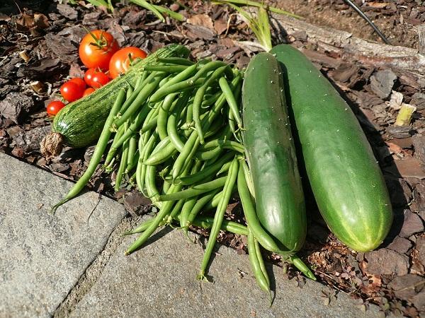 Zöldbab és uborka is kerülhet másodvetésként a kertekbe