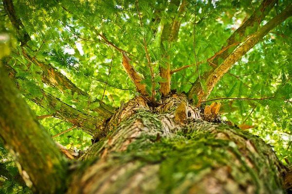 Az állami erdészetek feladata a szociális tűzifa biztosítása