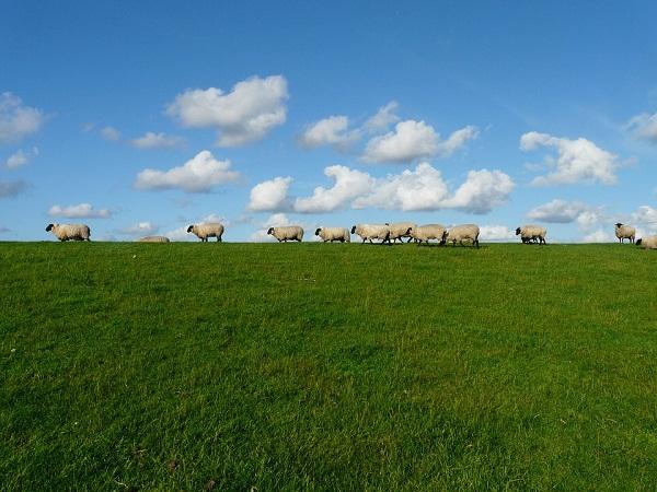 Komoly bajba kerülhet a brit juhágazat a Brexit miatt