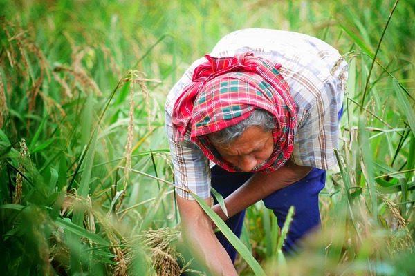 A munkáltatónak a munkaviszony minden naptári napjára a mezőgazdasági idénymunka esetén fizetendő közteherjegy 500 forint munkavállalónként.