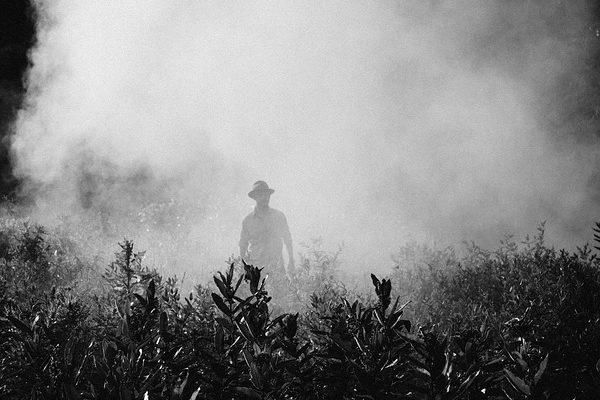 Aggályokat fogalmaztak meg a Bayer és Monsanto fúziójával kapcsolatban