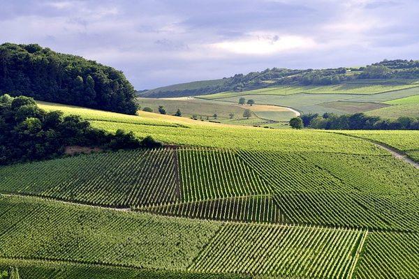 Az agrártámogatások rendszerének megtartásáról nyilatkoztak a Visegrádi négyek
