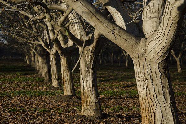 A kiskert tulajdonosok feladatai: gyümölcsfa metszés, zöldség betakarítás, ültetés
