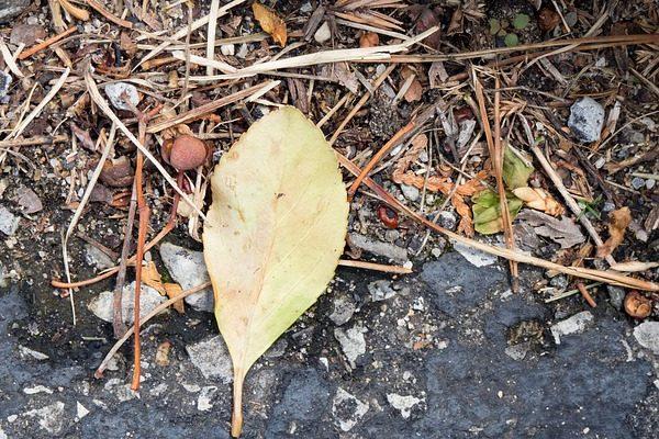 Baktériumtrágyával a jó talajélet érdekében