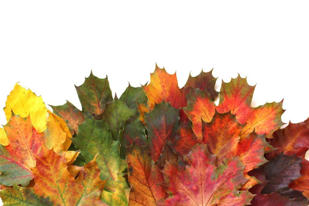 Az őszi kert rendbetétele felesleges? (Fotó: Pixabay, naturalpastels)