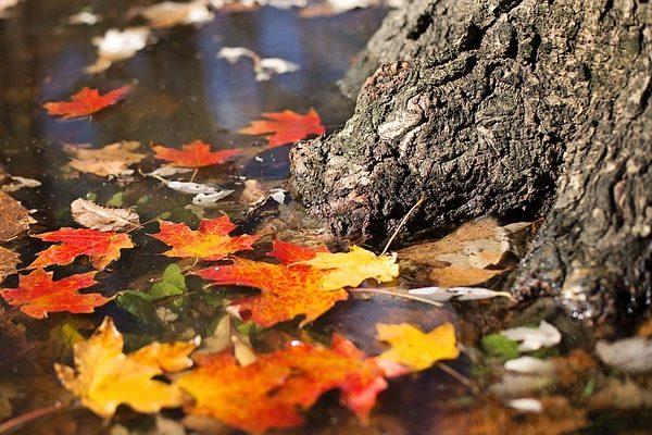 Október: összefoglaló a nitrogénezésről, almáról, karfiolról, birsről, pálinkáról - Foró: Pixabay, Jill Wellington