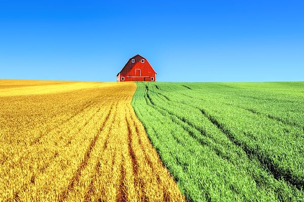 A BASF konferenciáján a mezőgazdaság jövője volt a téma a fenntarthatóság szemüvegén keresztül. - Fotó: Pixabay, Erwin Bosman