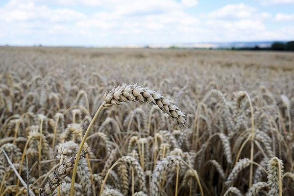 Az idei őszi betakarítás jó eredményeket hoz Magyarországon - Fotó: Pixabay, Andreas Lischka