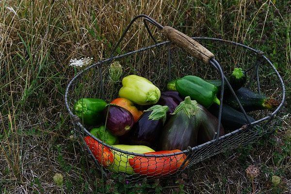 Több ezer magyar kert szépült meg a legszebb konyhakertek programban - Fotó: Pixabay, Johan Puisaisa