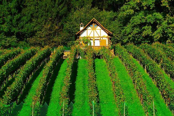 Emelkedőben a holland bor megítélése - Fotó: Pixabay, 422737