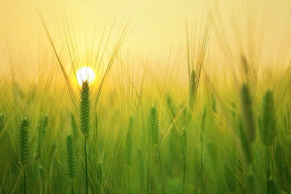 Új nap virrad az agráriumra az új közös agrárpolitika célkitűzéseivel - Fotó: Pixabay, kangbch