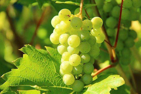 Az Egyesült Királyságban is árulja jövőre a Tesco a magyar borokat - Fotó: Pixabay, Klaus Böhm