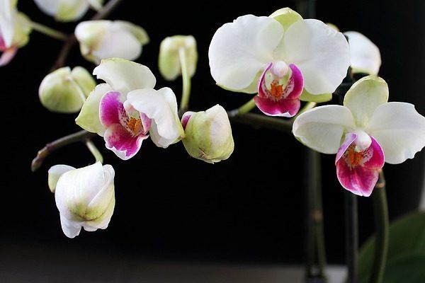 Megvalósítható a vegyszermentes növényvédelem a szobában - Fotó: Pixabay, Erbs55