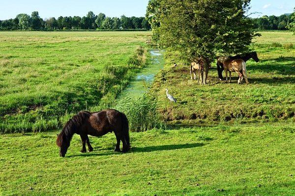 Jövőre már GMO-s lovak legelészhetnek - Képünk illusztráció, Pixabay, Mabel Amber