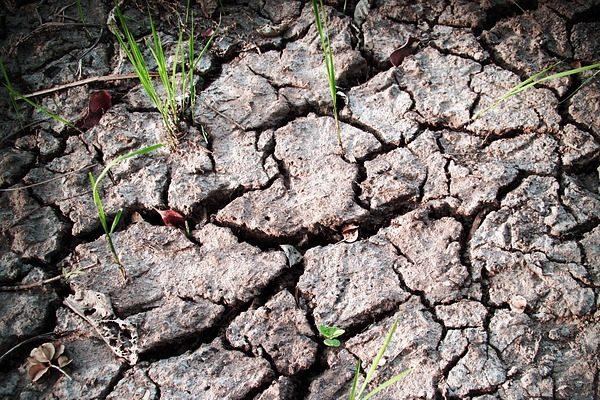 A kiszáradó talaj és az erózió ellen hatékony a barnaforradalom - Fotó: Pixabay, 41330