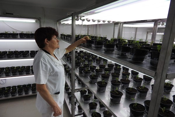 A Debreceni Egyetem újfajta növényszaporítási technológiát vezetett be - Fotó: Debreceni Egyetem