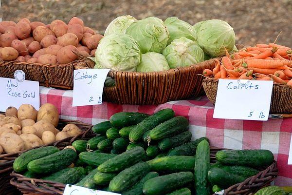 Az adóhivatal készíti a bevallást a mezőgazdasági őstermelők helyett - Fotó: Pixabay, Paul Brennan, illusztráció