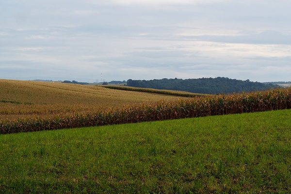 A mezőgazdasági statisztikák megmutatják, hogyan alakultak az adatok az agráriumban - Fotó: Pixabay, flockine