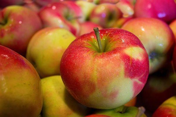 Magyar gyümölcsfajták kerülnek Ukrajnába - Fotó: Pixabay, MarcoRoosink