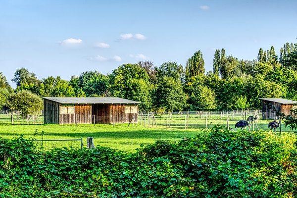 Szépen kialakított struccfarm - Fotó: Pixabay, Markus Distelrath