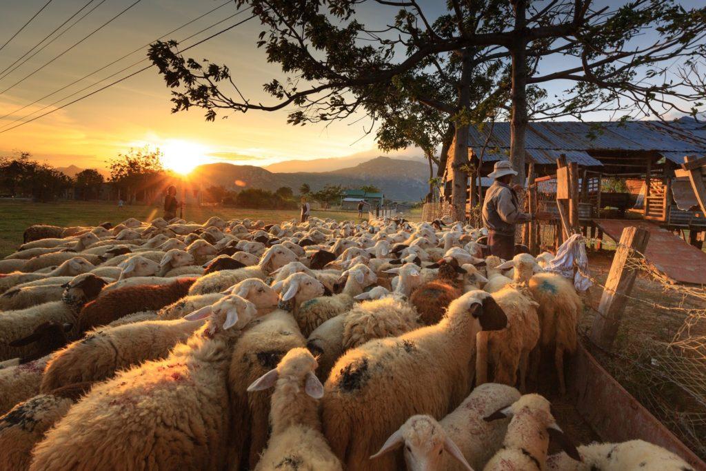 Vészesen közeleg a gazdálkodási napló benyújtásának határideje (Fotó: Pixabay, Quangpraha)