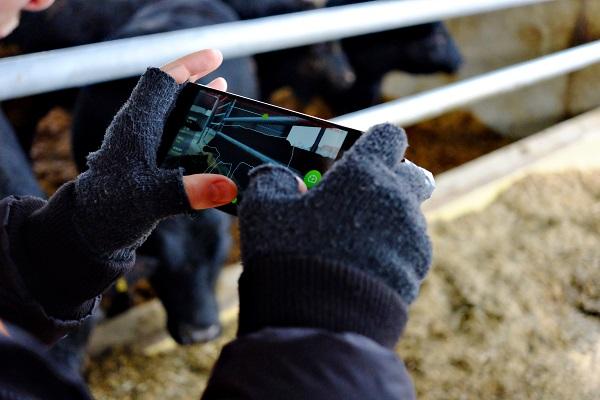 A Beefie digitális szarvasmarha mérleg megkímél a hídmérleg fenntartásától