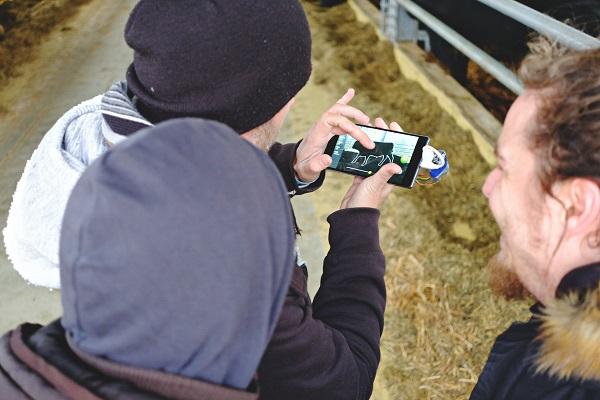 Gyorsan, pontosan és távolról is mérhető a marhák súlya
