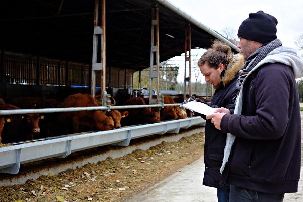 Jóval könnyebb a digitális súlymérés a hízómarha állományokban