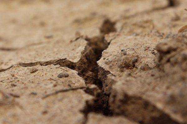 Az átlagosnál gyorsabb lesz a talajvizsgálat a NAK szolgáltatásában - egyelőre öt megyében