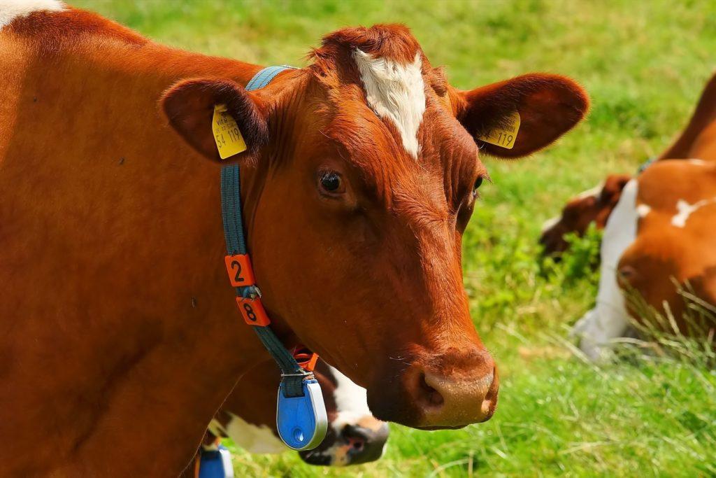 Bizonyos számú haszonállat tartása felett kötelező állatjóléti felelős alkalmazása (Fotó: Pixabay, Kapa65)