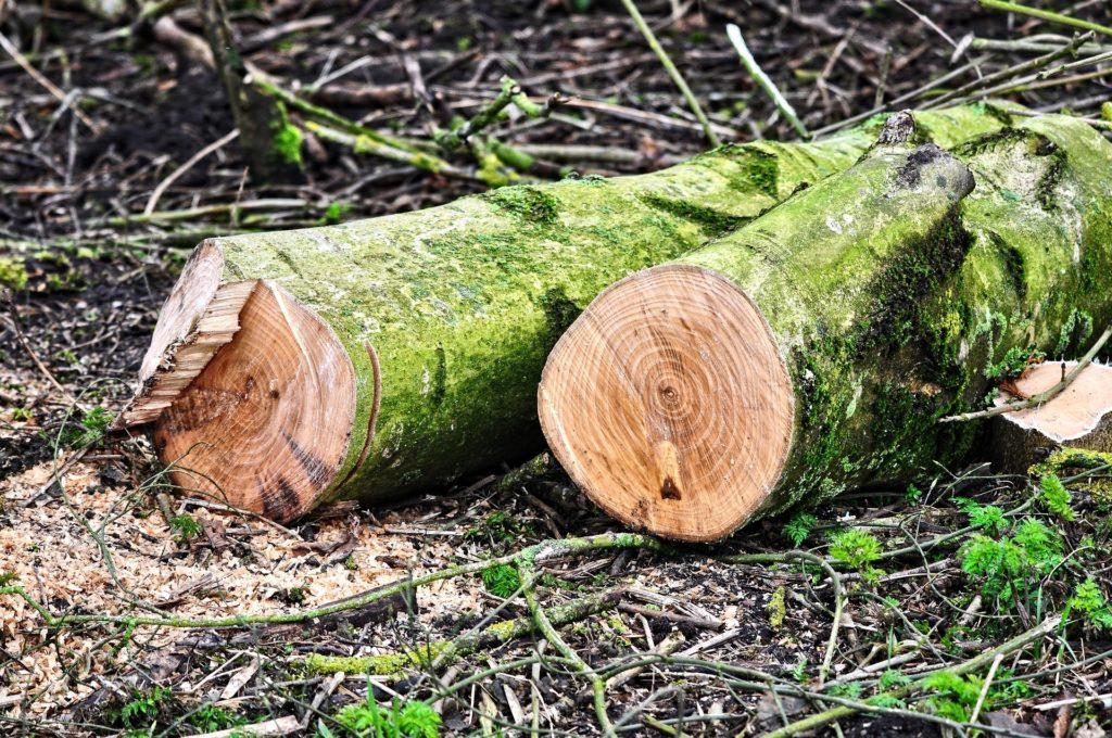 Erdészeti erdészeti gépbeszerzésre vehető fel támogatás (Fotó: Pixabay, MabelAmber)