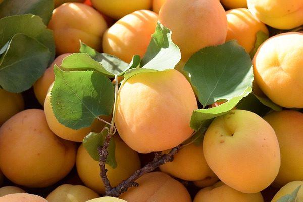 A fagykár Olaszországban sem kímélte a zöldség- és gyümölcstermesztő gazdákat, jókora terméskiesésre számítanak az ágazat szakértői
