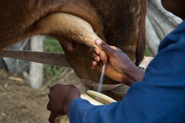 Magyar tejet vihetnek Indiába a növekvő népesség és a kereslet miatt