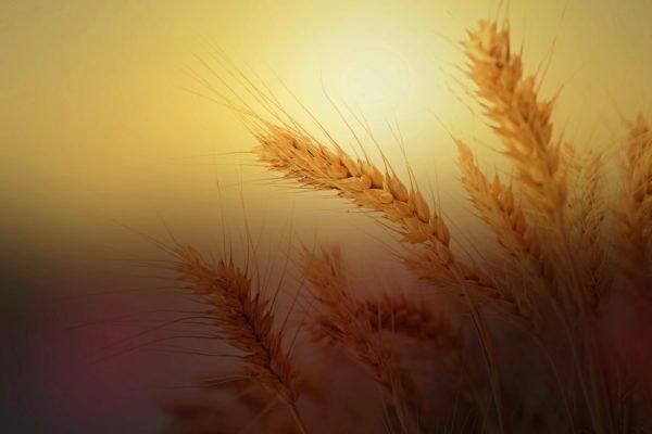 Nemcsak a szlovák, az olasz mezőgazdaságban is jelentős erővel bír a maffia (Fotó: Pixabay, cocoparisienne)