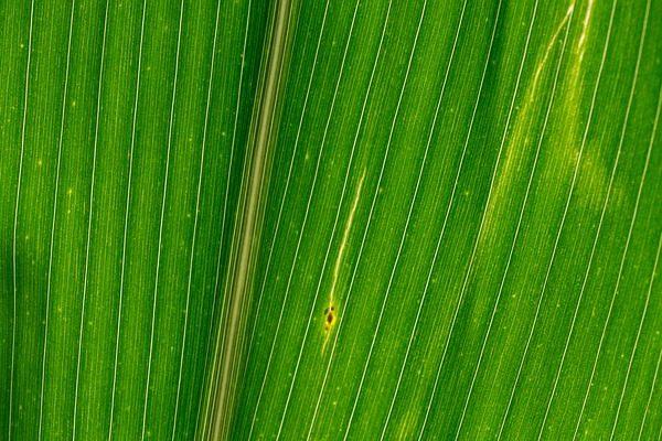 A lombtrágyák és a biostimulátorok iránti kereslet jelentősen megnőtt