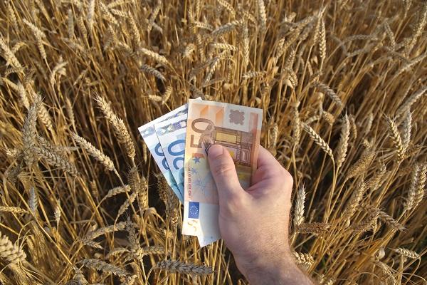 A mezőgazdaságban dolgozók iránt van igény, de ahogy a többi ágazatban, itt is munkaerőhiány van