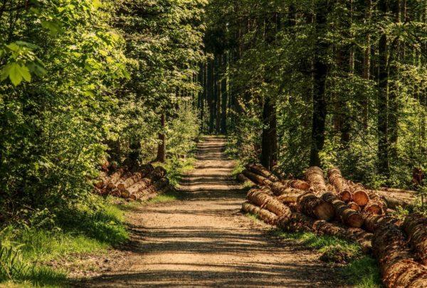 Fenntartható gazdálkodás mellett a megújuló energiaforrások között is kiemelkedő a faenergia (Fotó: Pixabay, pixel2013)