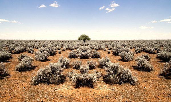 Egy norvég kutató találmányának köszönhetően sokkal olcsóbbá válhat a sivatagi növénytermesztés